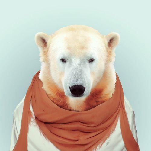 yago partal ours polaire