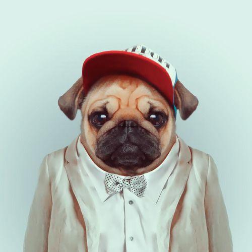 yago partal chien