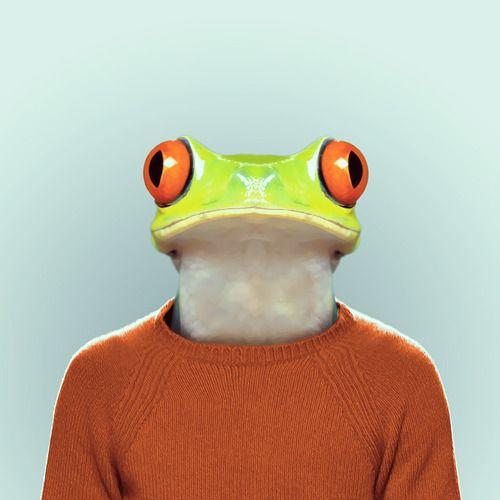 yago partal grenouille