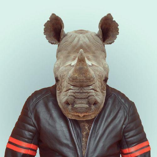Yago Partal rhinocéros